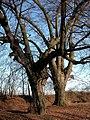 105 Lindenallee Ladendorf Winter Zwei Kameraden.jpg