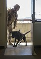 1st Law Enforcement Battalion Trains with Military Working Dogs Daily to Strengthen Communication Between Handler and K-9 160815-M-ZZ999-061.jpg