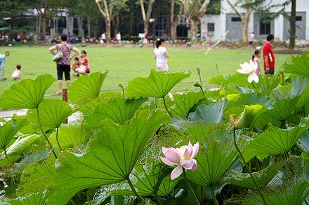 Zhongshan park shanghai wikiwand lotus flowers in zhongshan park mightylinksfo