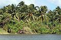 2012-02-Baracoa Riom Miel 02 anagoria.JPG