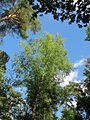 20130731Speyrer Wald35.jpg