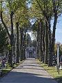 2014 Kłodzko, cmentarz komunalny, główna aleja.JPG
