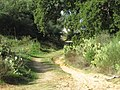 2016-10-28, Albufeira, Unnamed footpath in Montechoro (1).JPG