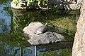 29 Ōiwahonchō, Aoi-ku, Shizuoka-shi, Shizuoka-ken 420-0884, Japan - panoramio (3).jpg