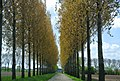 4116 Buren, Netherlands - panoramio (10).jpg