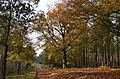 5 minutes sunshine at 7 November 2014. Nice autumn view at National Park Hoge Veluwe - panoramio.jpg