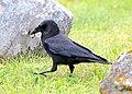 649 Raven, Seward, Alaska.jpg