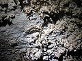 70E Helictites 4 (8324762433).jpg