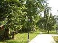 71Mehan Garden Ermita Manila Universidad de Manila 02.jpg