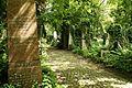 9796viki Cmentarz żydowski na Ślężnej. Foto Barbara Maliszewska.jpg