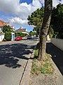 A6 road in Jersey.jpg