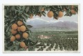 A California Vista, Santa Barbara, Calif (NYPL b12647398-75542).tiff