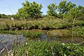 A Riparian Buffer offers a filtration system that is generated by mother nature. Plants work together to filtrate out pollutants that could make it into the water. (24817411720).jpg