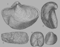 A Treatise on Geology, plate 8.png