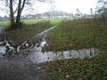 A boggy scene in Shalford Park - geograph.org.uk - 1082804.jpg