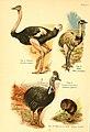 A book of birds (Plate I) (6021705365).jpg
