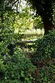 A fence and hedgerow on Santon Lane at Stourmouth Kent England.jpg