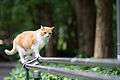 A friendly kitty in a park (7490866926).jpg