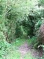 A hedge-lined path - geograph.org.uk - 1366080.jpg