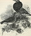 A popular handbook of the birds of the United States and Canada (1903) (14565814007).jpg