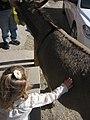 Abby, Oatman, Arizona (20) (4354869249).jpg