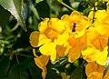 Abelha flor amarela.jpg