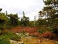 Acadia National Park (8111147665).jpg