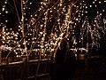 Addobbi natalizi a Rieti sul fiume Velino (6703758223).jpg