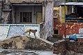 Agra - panoramio (1).jpg