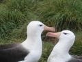 Albatros2.jpg