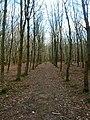 Alders Wood - geograph.org.uk - 323377.jpg