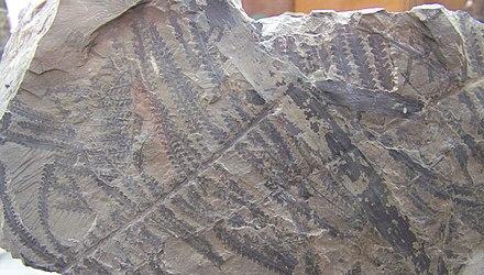 verschillende methoden voor het daten van fossielenDating telefoonlijnen Quest