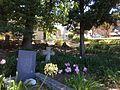 Amaryllis belladonna graveyard.JPG