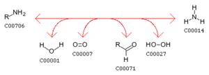 Pyridoxine 5'-phosphate oxidase - Image: Amine reaction