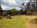 Ampthill Park - geograph.org.uk - 154142.jpg