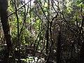 Andasibe-Mantadia National Park 2013 06.jpg