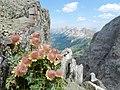 Anemone alpino - panoramio.jpg