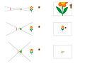 Angolo di campo diverso e lung focale diversa e sensore uguale.jpg