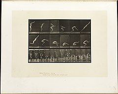 Animal locomotion. Plate 163 (Boston Public Library).jpg