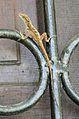 Anolis cristatellus in Picard, Dominica-2012 02 23 0389.jpg