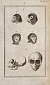 Apes' skulls; six figures showing ape heads and an ape skull Wellcome V0008016EL.jpg