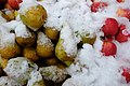 Apples and pears covered in snow at Marché de Boitsfort (Belgium).jpg