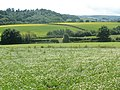 Arable land, south of Shillingford Abbot - geograph.org.uk - 1348075.jpg