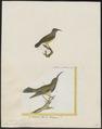 Arachnothera zeylonica - 1700-1880 - Print - Iconographia Zoologica - Special Collections University of Amsterdam - UBA01 IZ19000195.tif