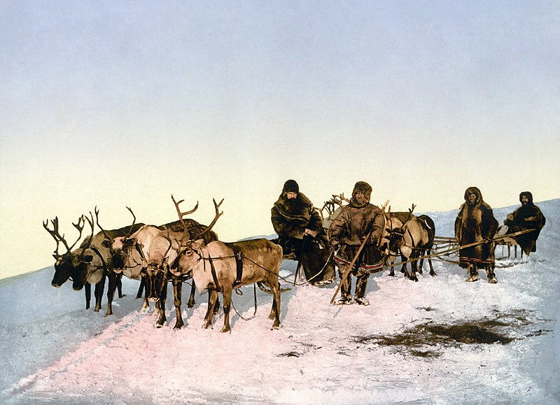 """... Myself...What A Wonderful World.: """"They Actually Eat That:"""" Reindeer"""