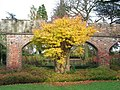 Ashridge House - Gardens - geograph.org.uk - 1568930.jpg