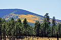 Aspen on mountainside (3971442347).jpg
