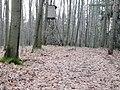 Auf dem Böthchenberg.jpg