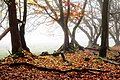 Autumn - Trees - Herbsttag.jpg