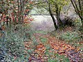 Autumn Glory - geograph.org.uk - 621148.jpg